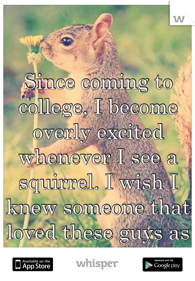 Since coming to college, I become overly excited whenever I see a squirrel. I wish I knew someone that loved these guys as much as I do! ❤