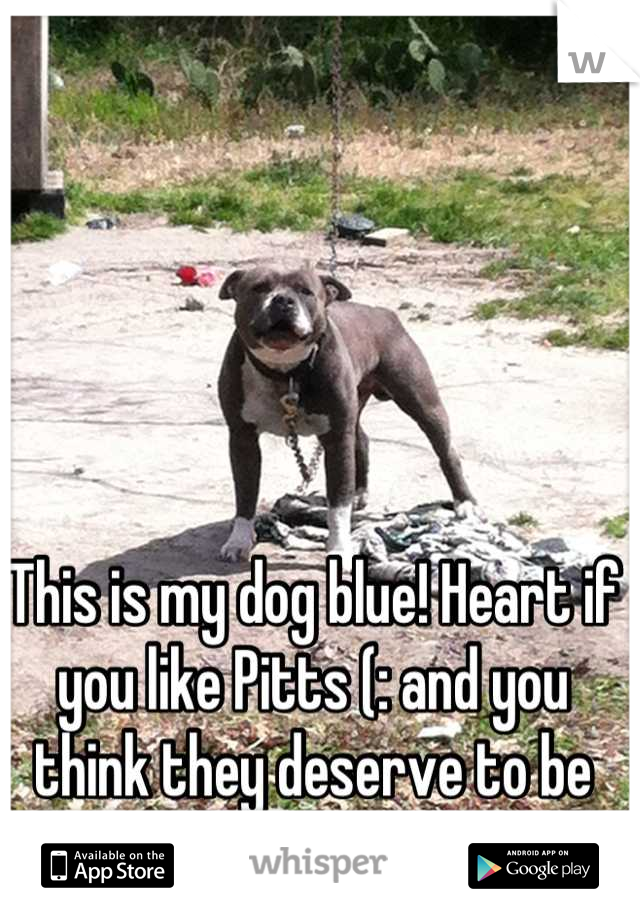 This is my dog blue! Heart if you like Pitts (: and you think they deserve to be treated like any other dog