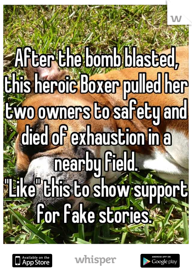 "After the bomb blasted, this heroic Boxer pulled her two owners to safety and died of exhaustion in a nearby field.  ""Like"" this to show support for fake stories."