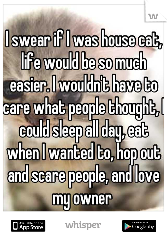 I swear if I was house cat, life would be so much easier. I wouldn't have to care what people thought, I could sleep all day, eat when I wanted to, hop out and scare people, and love my owner