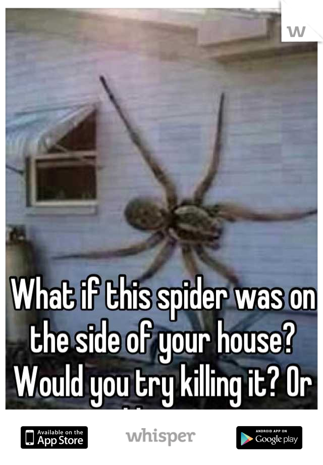 What if this spider was on the side of your house? Would you try killing it? Or would you run?