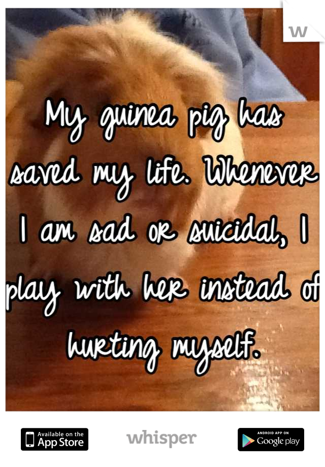 My guinea pig has saved my life. Whenever I am sad or suicidal, I play with her instead of hurting myself.
