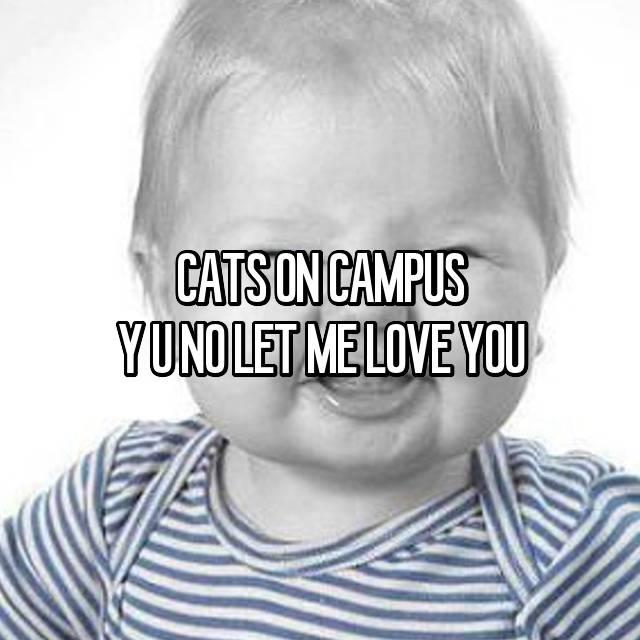 CATS ON CAMPUS Y U NO LET ME LOVE YOU