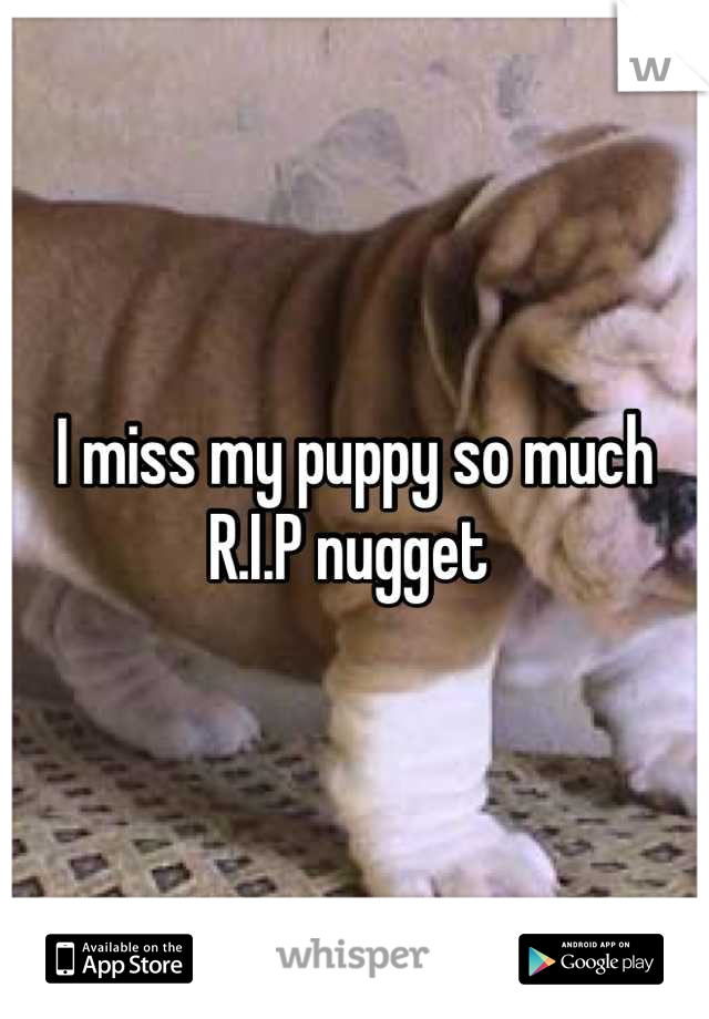 I miss my puppy so much R.I.P nugget