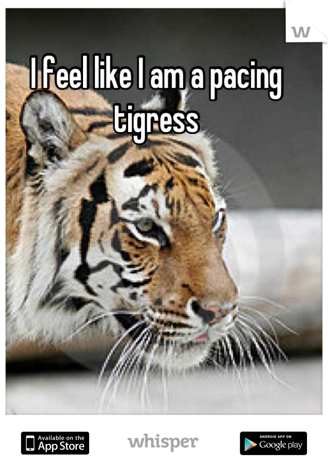 I feel like I am a pacing tigress