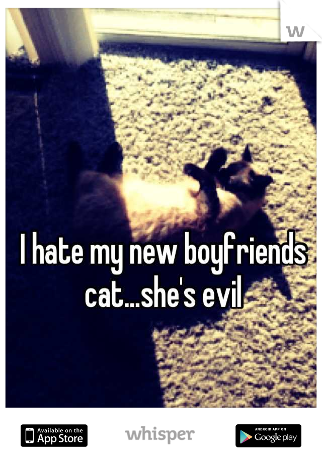 I hate my new boyfriends cat...she's evil