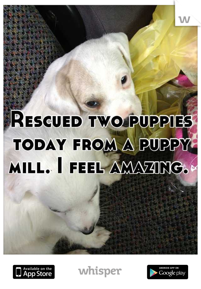 Rescued two puppies today from a puppy mill. I feel amazing.