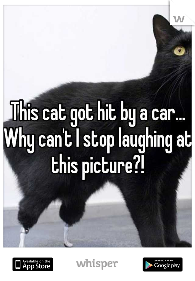 This cat got hit by a car... Why can't I stop laughing at this picture?!