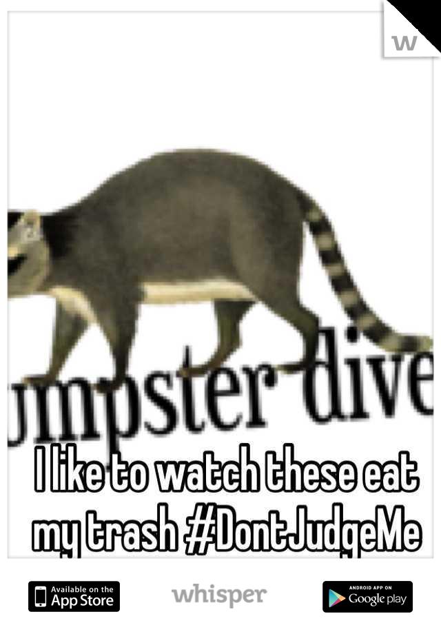 I like to watch these eat my trash #DontJudgeMe