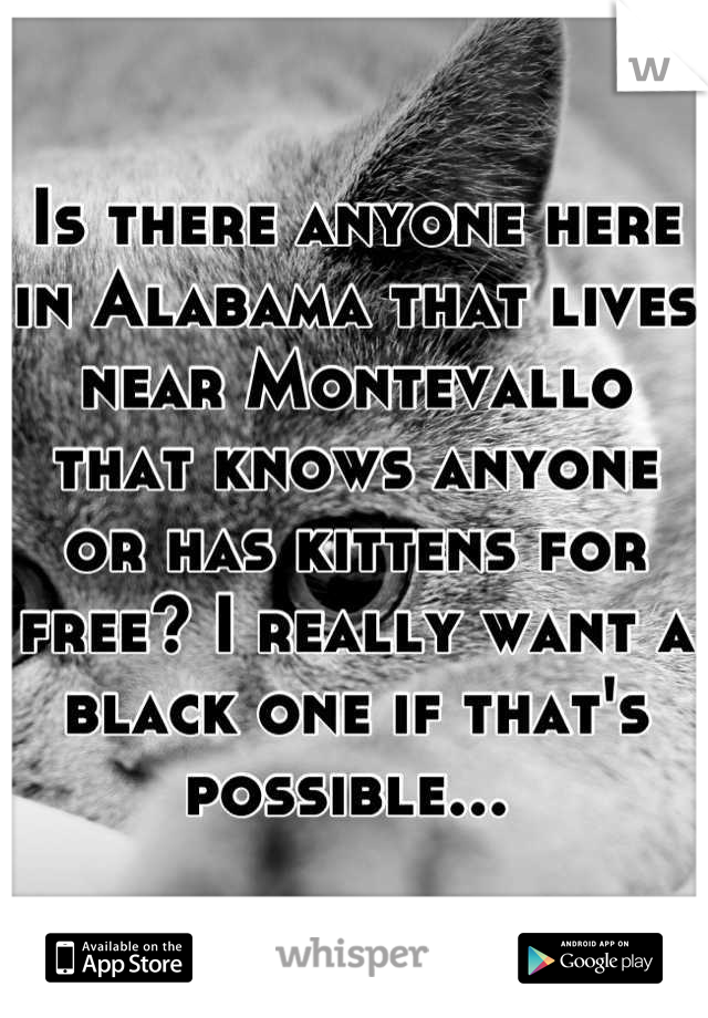 Is there anyone here in Alabama that lives near Montevallo that knows anyone or has kittens for free? I really want a black one if that's possible...