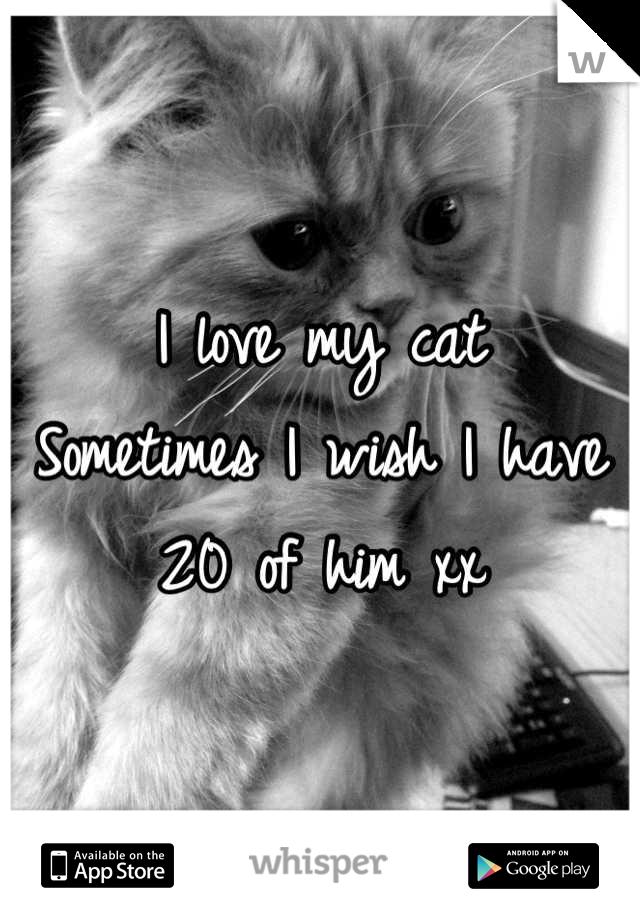 I love my cat Sometimes I wish I have 20 of him xx