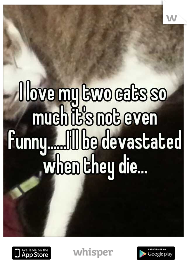 I love my two cats so much it's not even funny......I'll be devastated when they die...