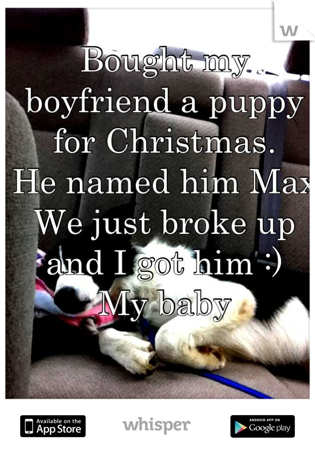 Bought my boyfriend a puppy for Christmas.  He named him Max We just broke up and I got him :) My baby   Sucks to be you