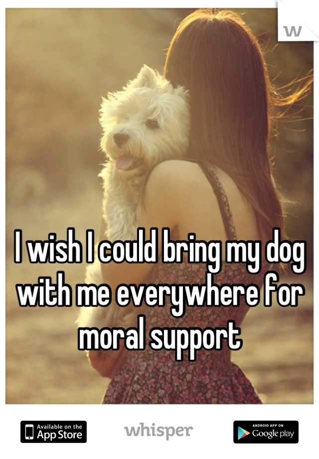 I wish I could bring my dog with me everywhere for moral support