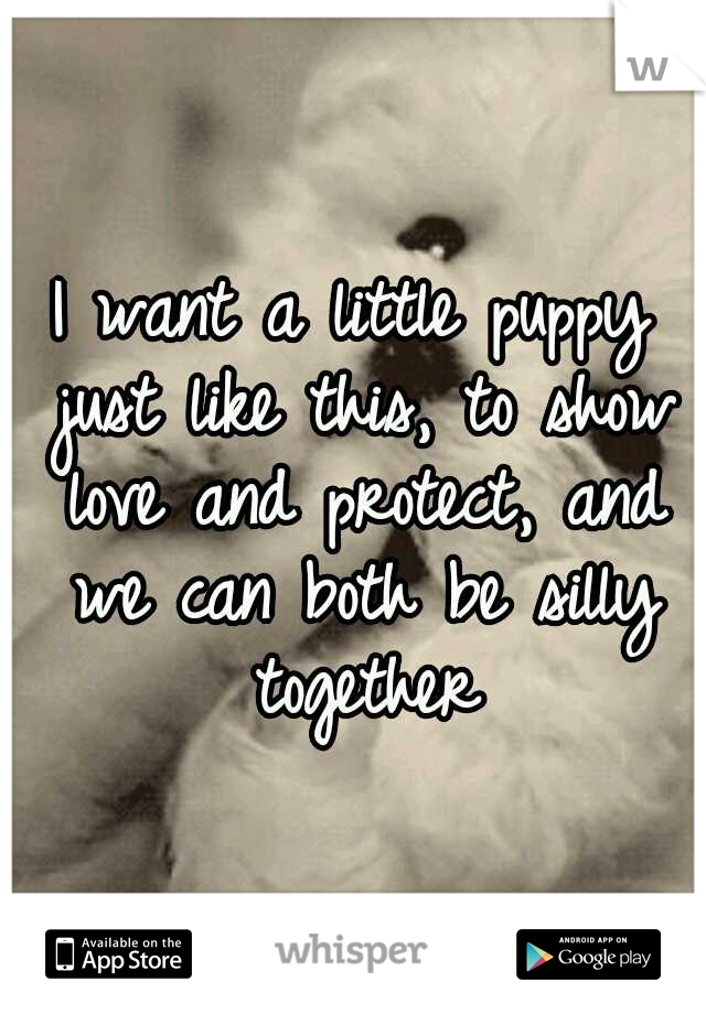 I want a little puppy just like this, to show love and protect, and we can both be silly together