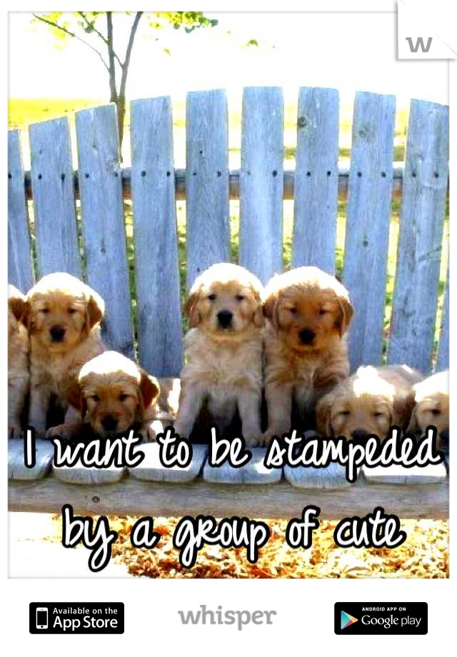 I want to be stampeded by a group of cute puppies. <3