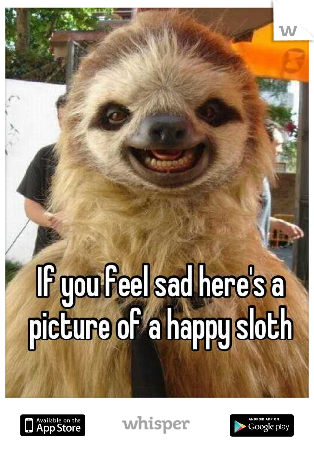 04dd58ce60b863148323d7cc85c204b55ee346 wm?v=3 you feel sad here's a picture of a happy sloth