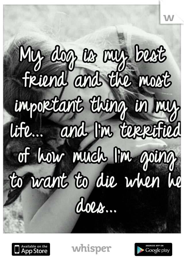 My dog is my best friend and the most important thing in my life...  and I'm terrified of how much I'm going to want to die when he does...