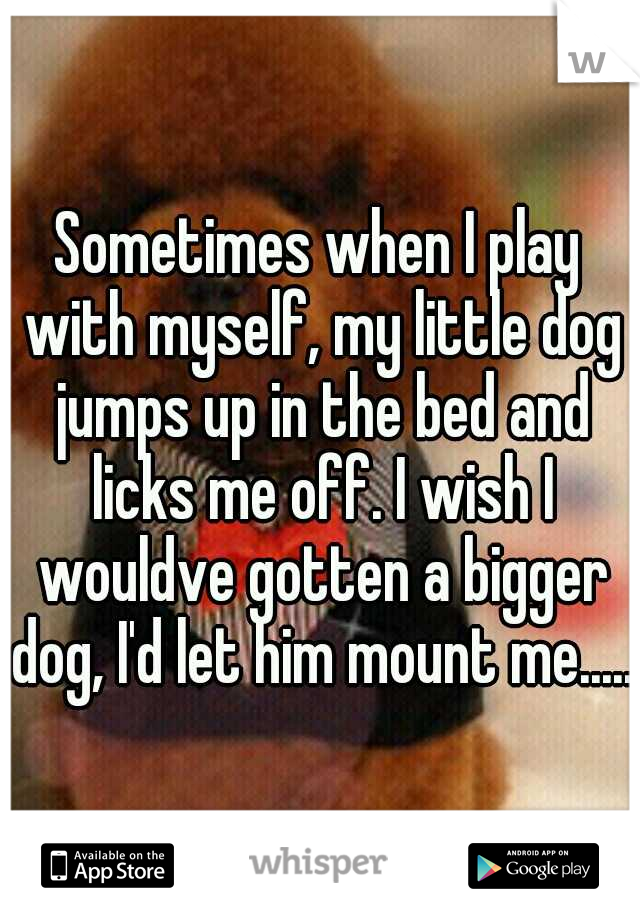 Sometimes when I play with myself, my little dog jumps up in the bed and licks me off. I wish I wouldve gotten a bigger dog, I'd let him mount me.....