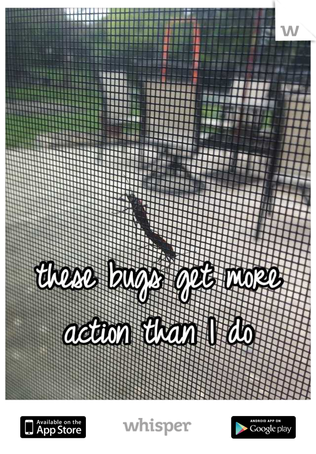these bugs get more action than I do