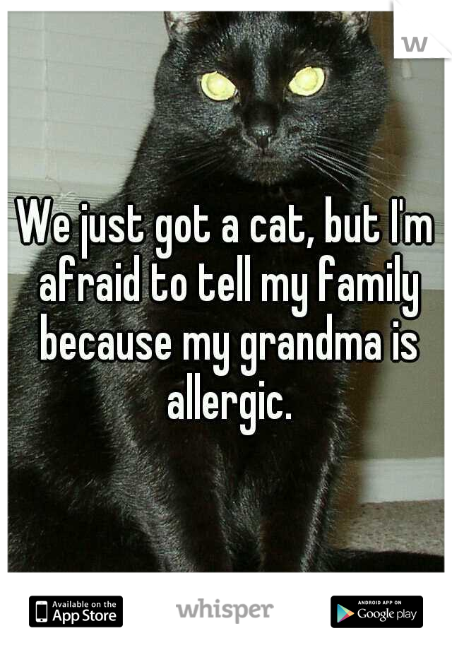 We just got a cat, but I'm afraid to tell my family because my grandma is allergic.