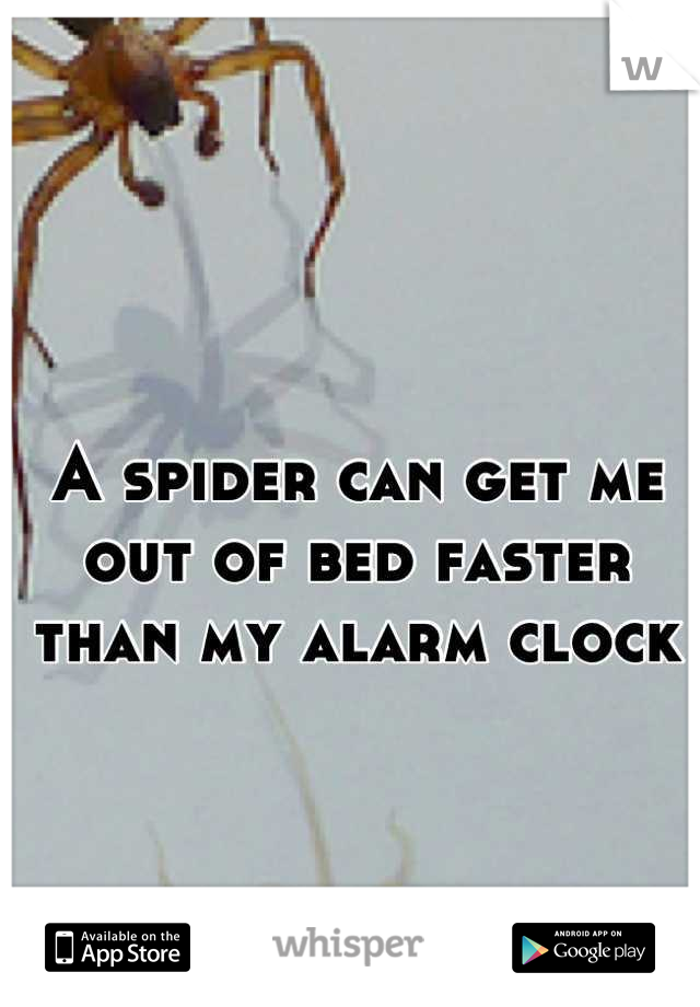 A spider can get me out of bed faster than my alarm clock