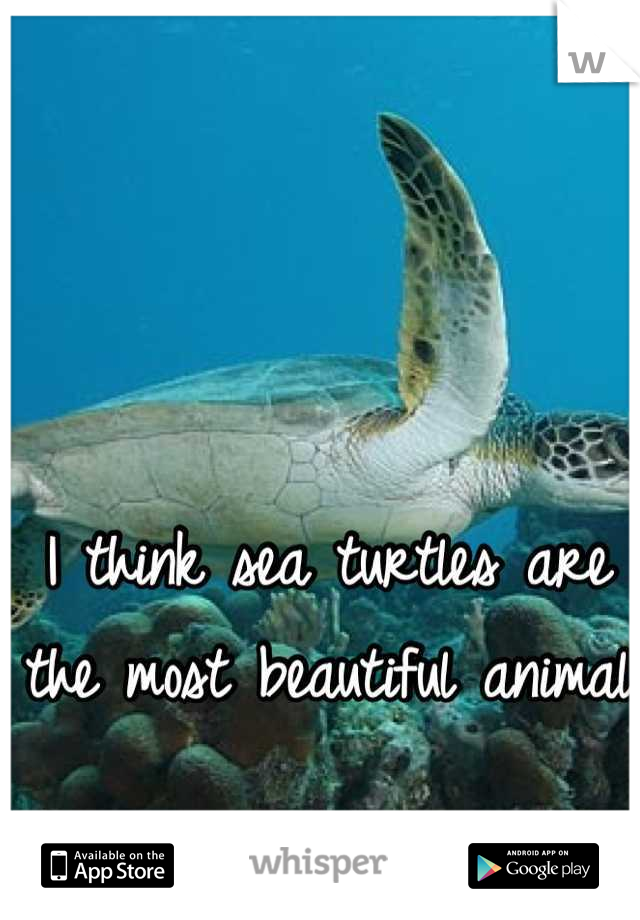 I think sea turtles are the most beautiful animal
