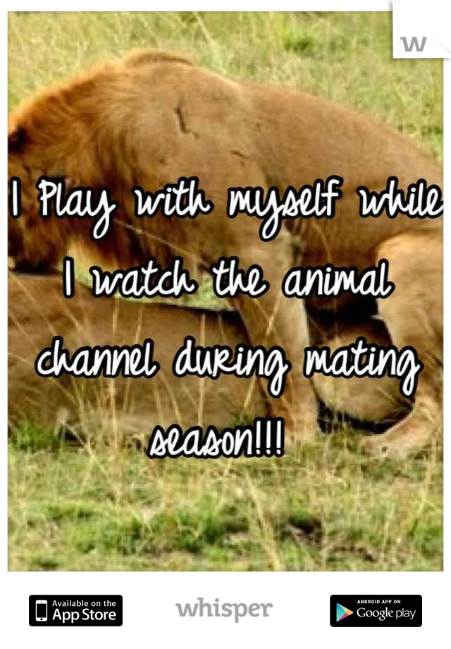 I Play with myself while I watch the animal  channel during mating season!!!