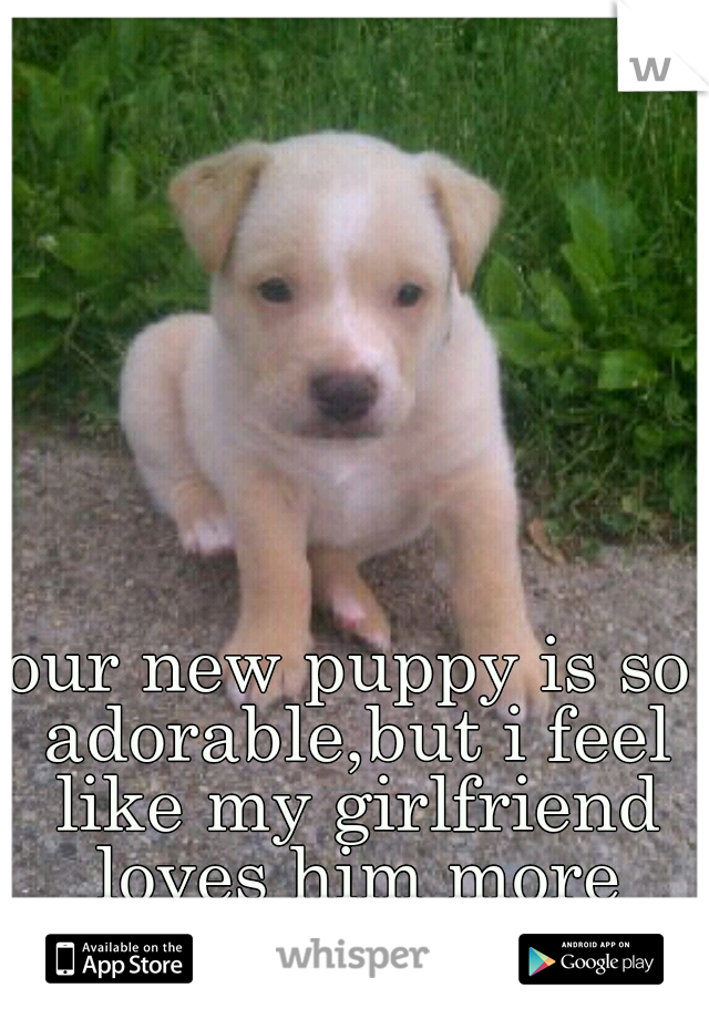 our new puppy is so adorable,but i feel like my girlfriend loves him more then me at time!!!!