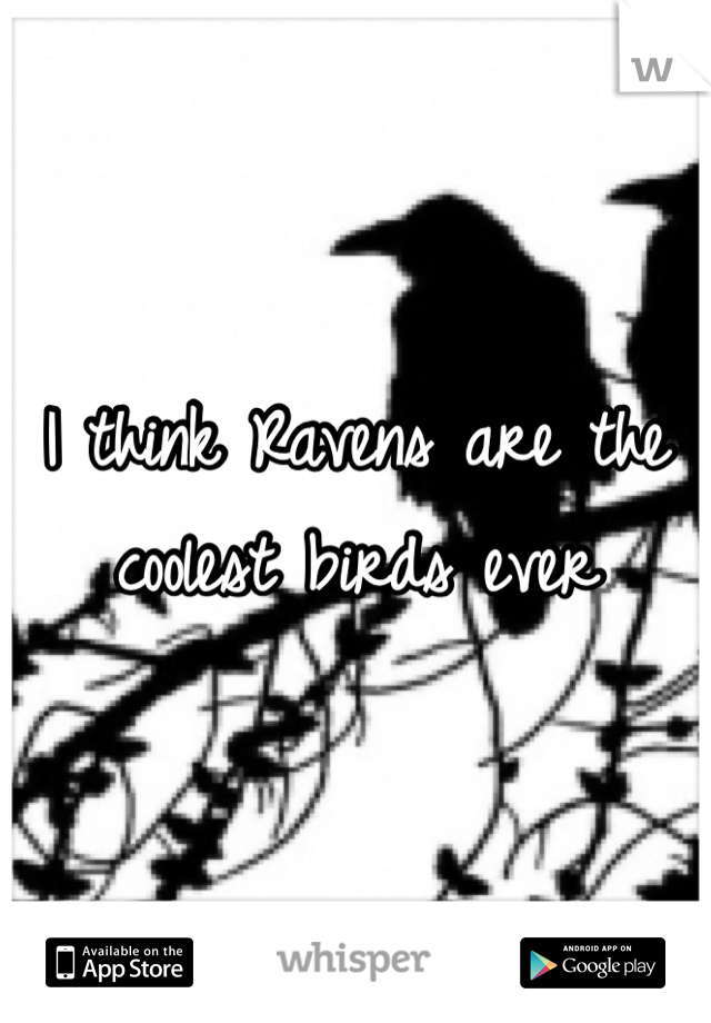 I think Ravens are the coolest birds ever
