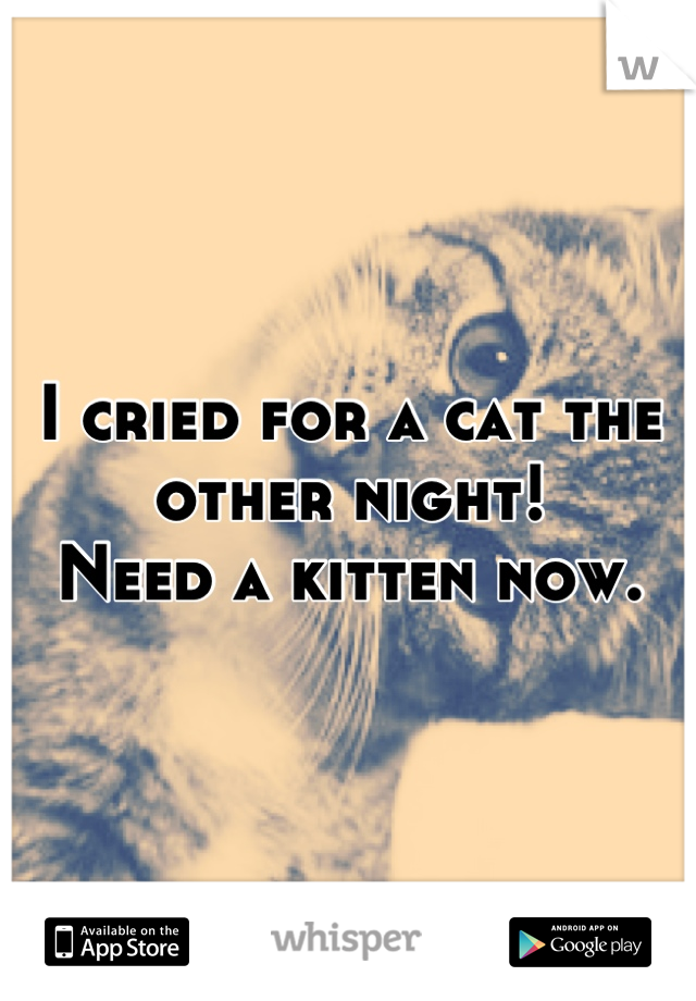 I cried for a cat the other night!  Need a kitten now.