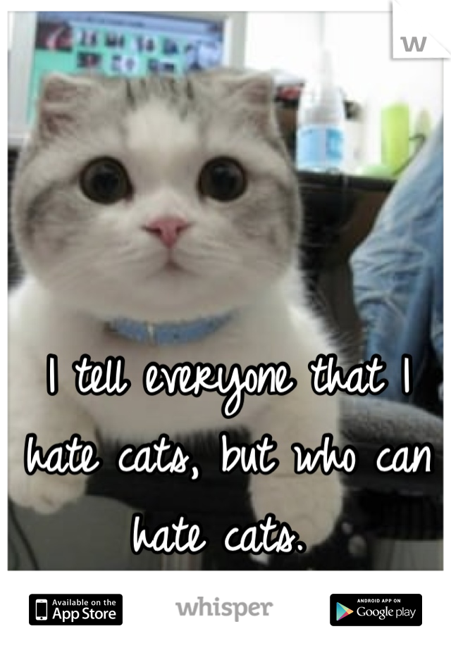 I tell everyone that I hate cats, but who can hate cats.