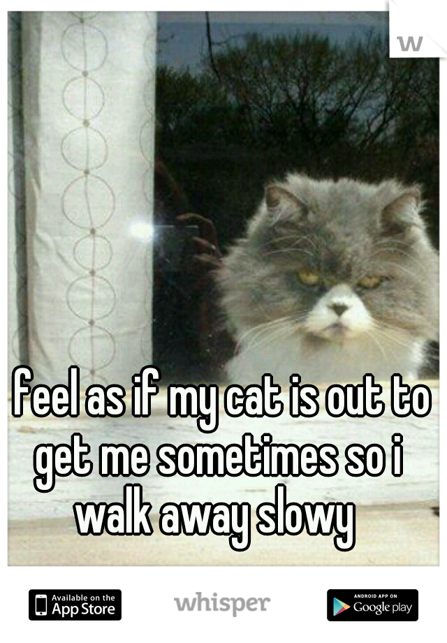 I feel as if my cat is out to get me sometimes so i walk away slowy