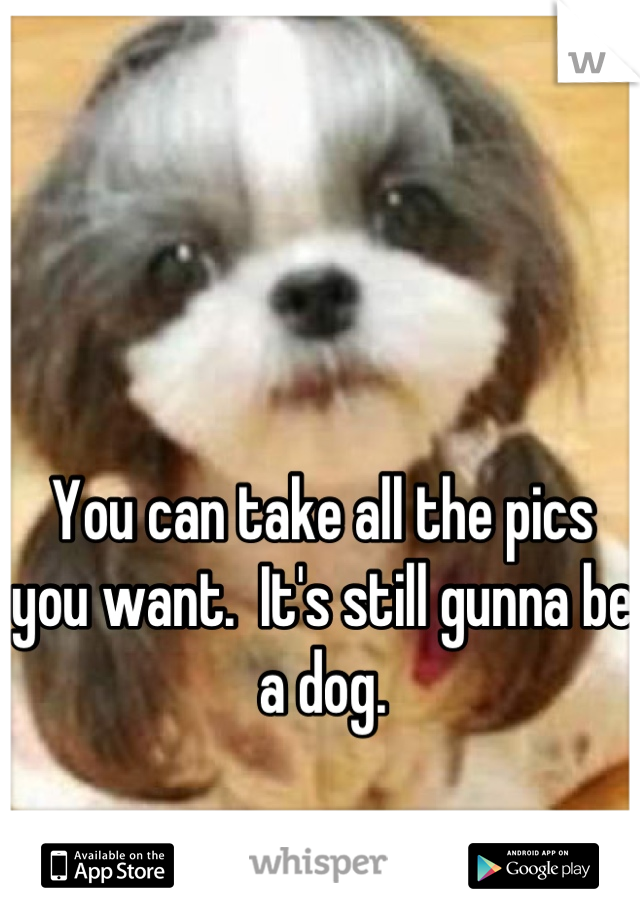 You can take all the pics you want.  It's still gunna be a dog.
