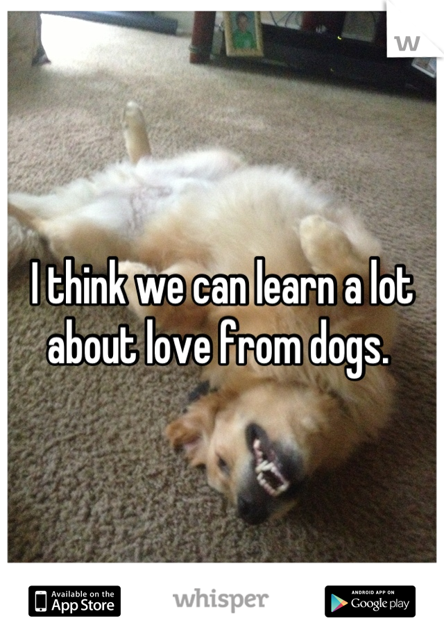 I think we can learn a lot about love from dogs.