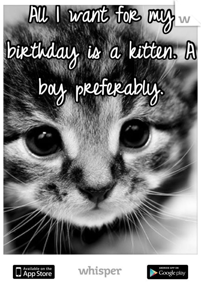 All I want for my birthday is a kitten. A boy preferably.