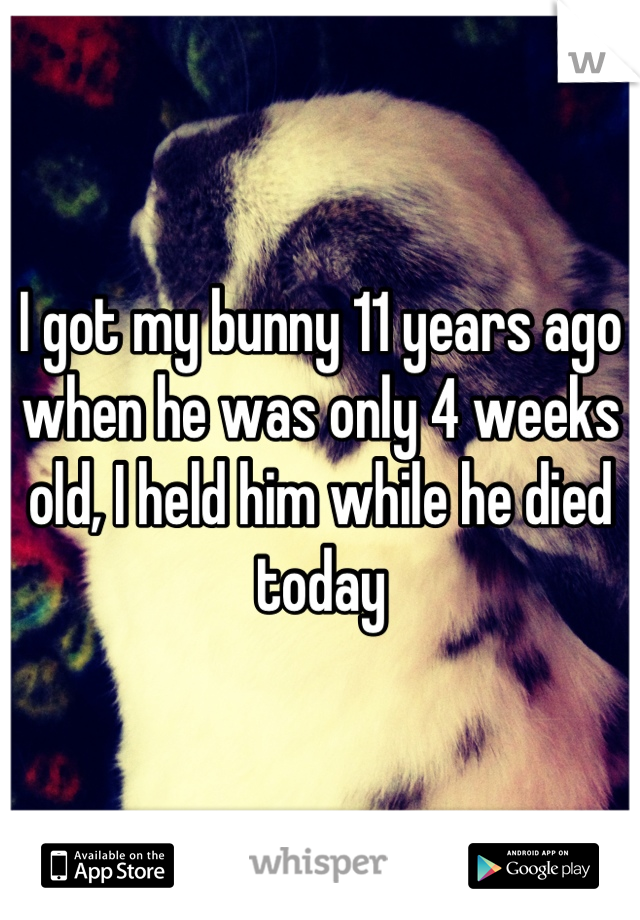 I got my bunny 11 years ago when he was only 4 weeks old, I held him while he died today