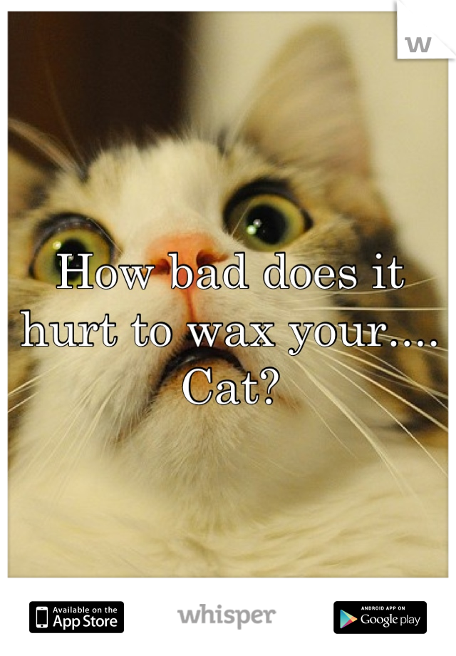 How bad does it hurt to wax your.... Cat?