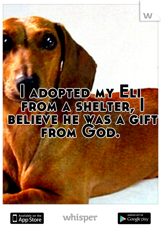 I adopted my Eli from a shelter, I believe he was a gift from God.