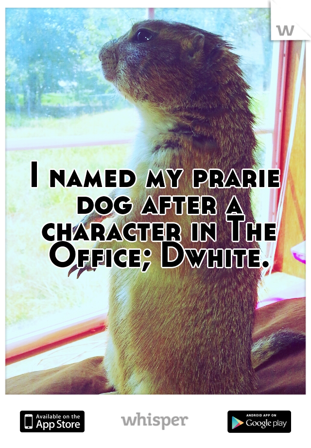 I named my prarie dog after a character in The Office; Dwhite.