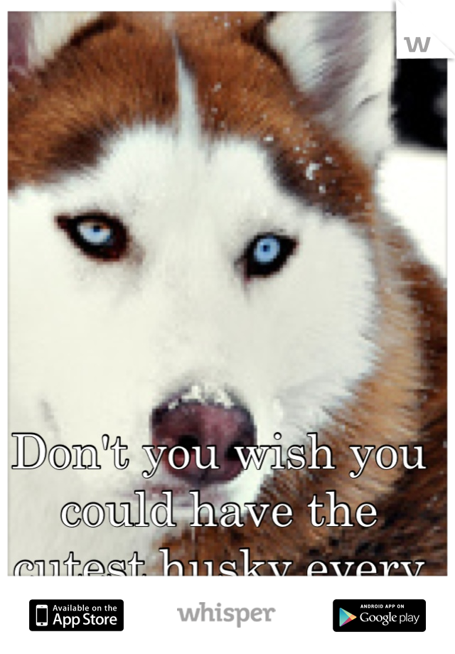 Don't you wish you could have the cutest husky every :)