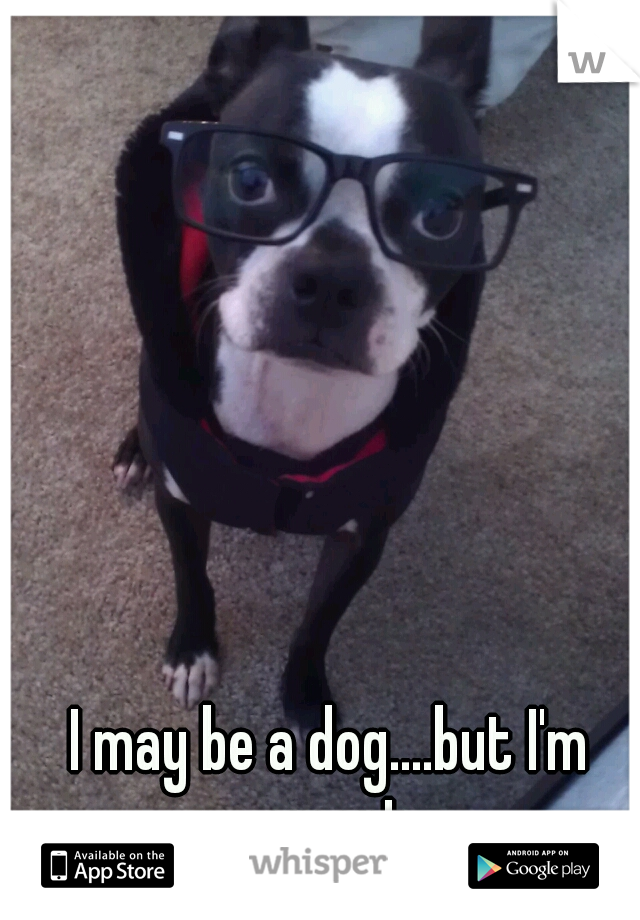 I may be a dog....but I'm smart