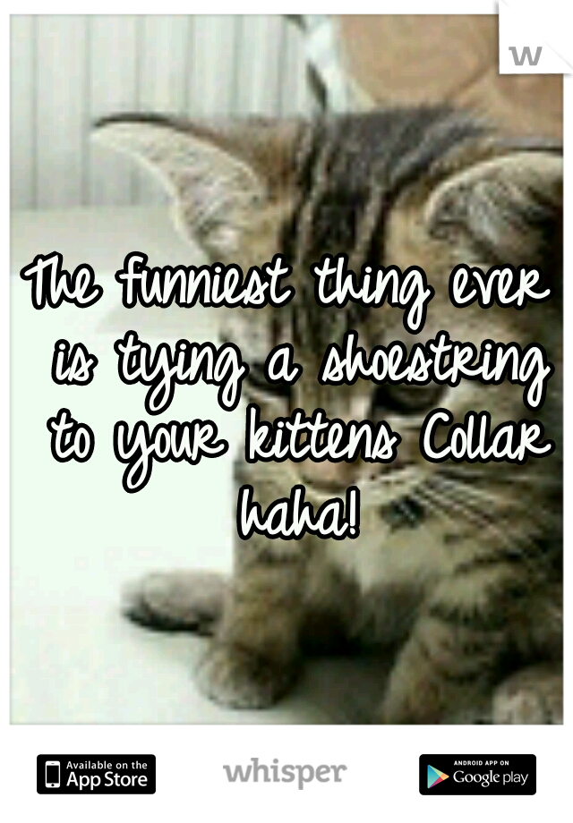 The funniest thing ever is tying a shoestring to your kittens Collar haha!