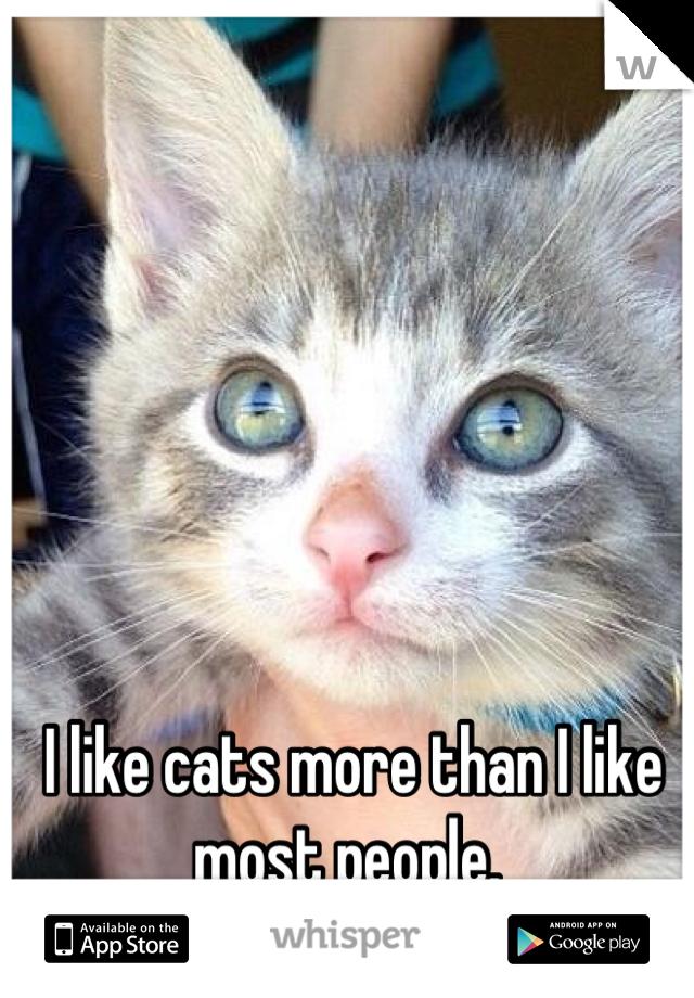 I like cats more than I like most people.