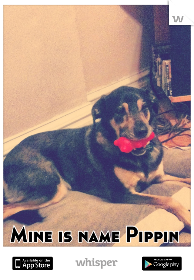 Mine is name Pippin