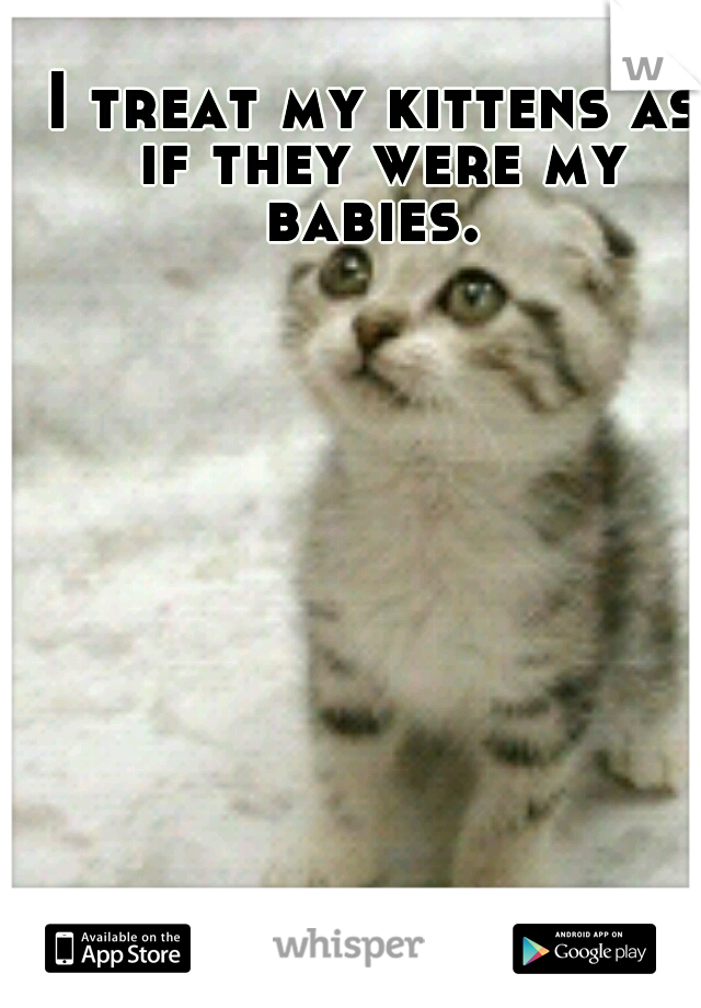 I treat my kittens as if they were my babies.