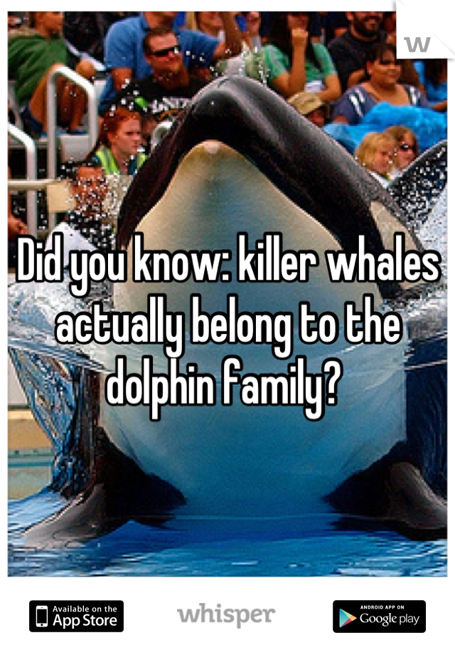 Did you know: killer whales actually belong to the dolphin family?