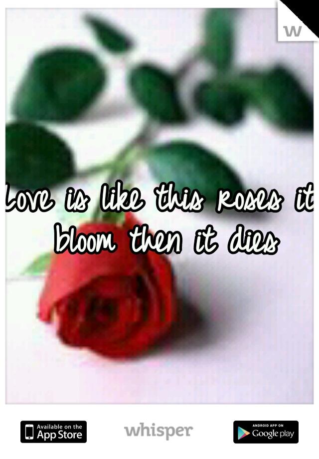 Love is like this roses it bloom then it dies