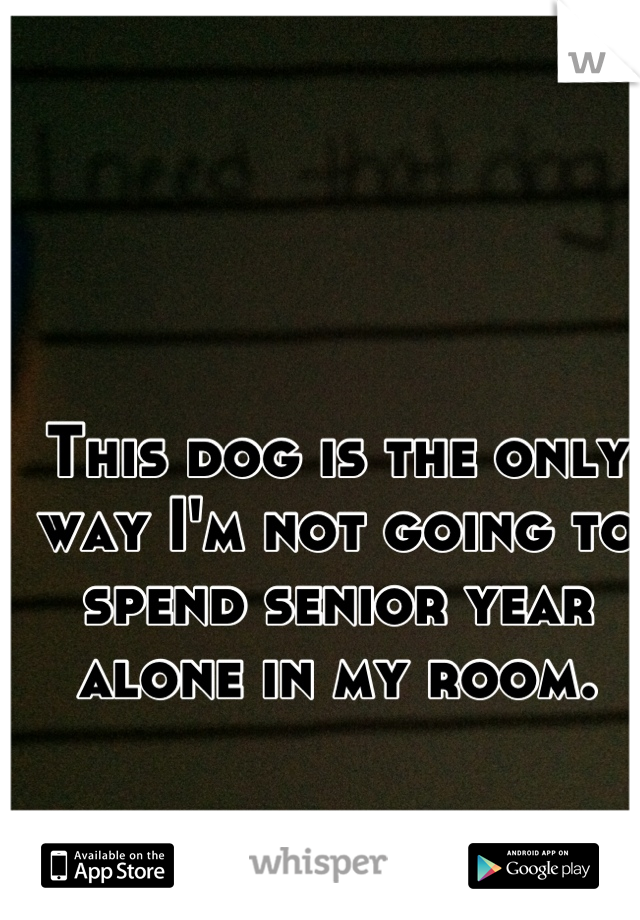 This dog is the only way I'm not going to spend senior year alone in my room.