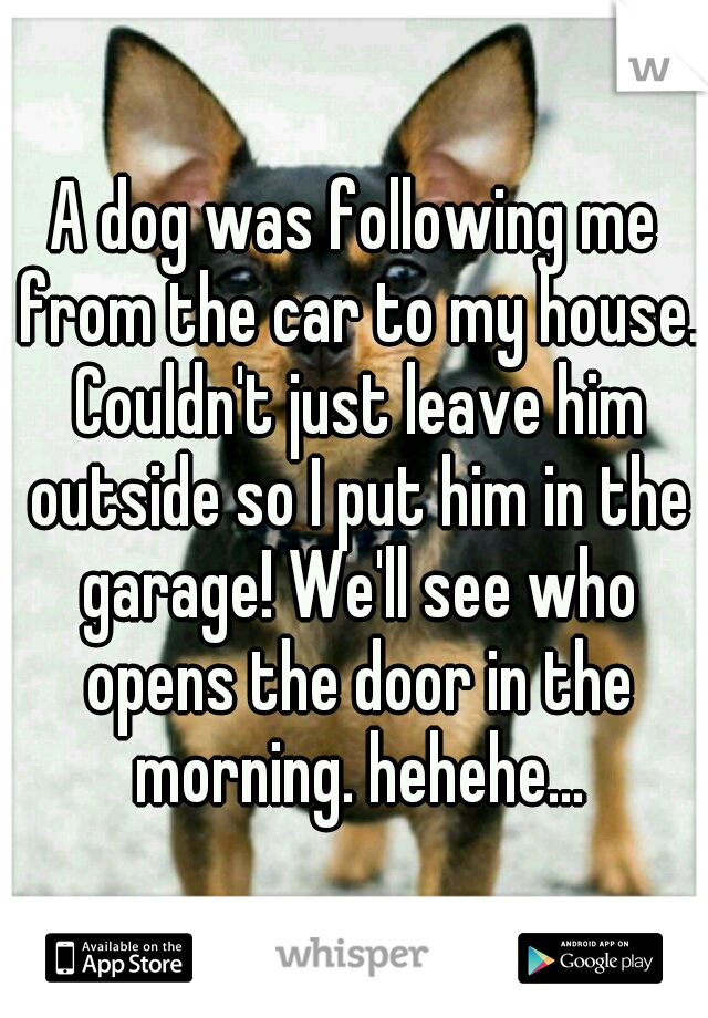 A dog was following me from the car to my house. Couldn't just leave him outside so I put him in the garage! We'll see who opens the door in the morning. hehehe...